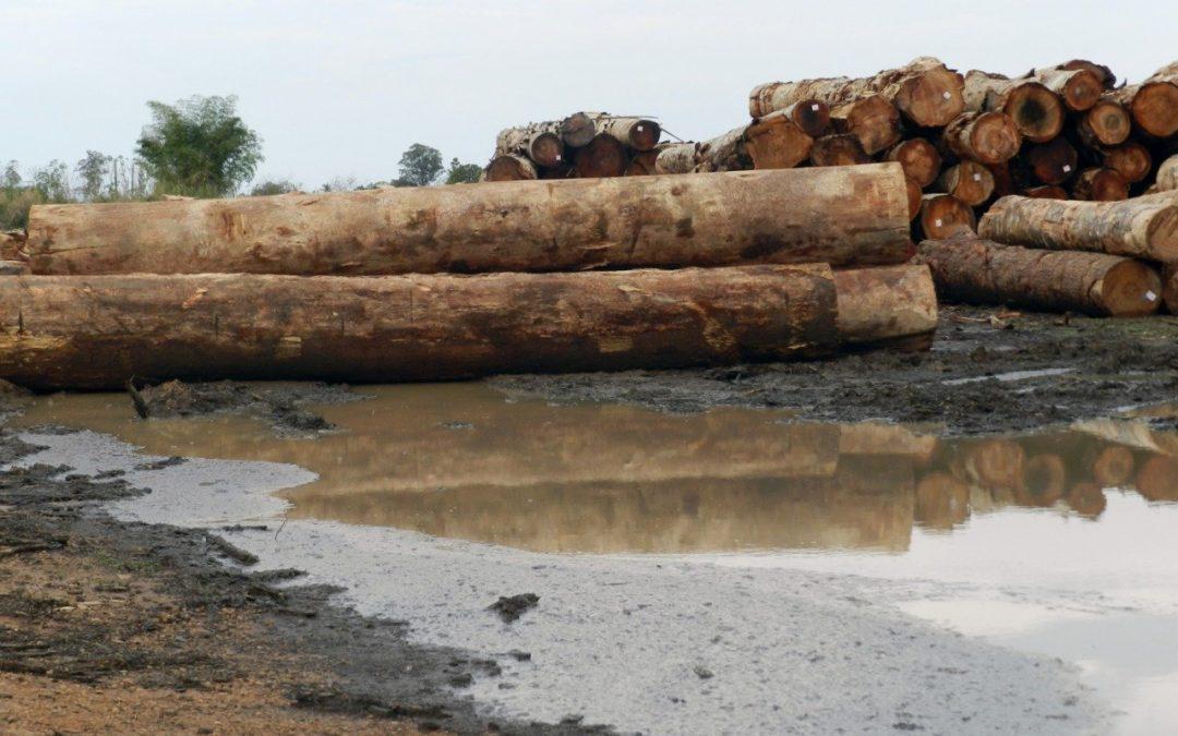 Madera sucia: los últimos árboles de la Amazonía