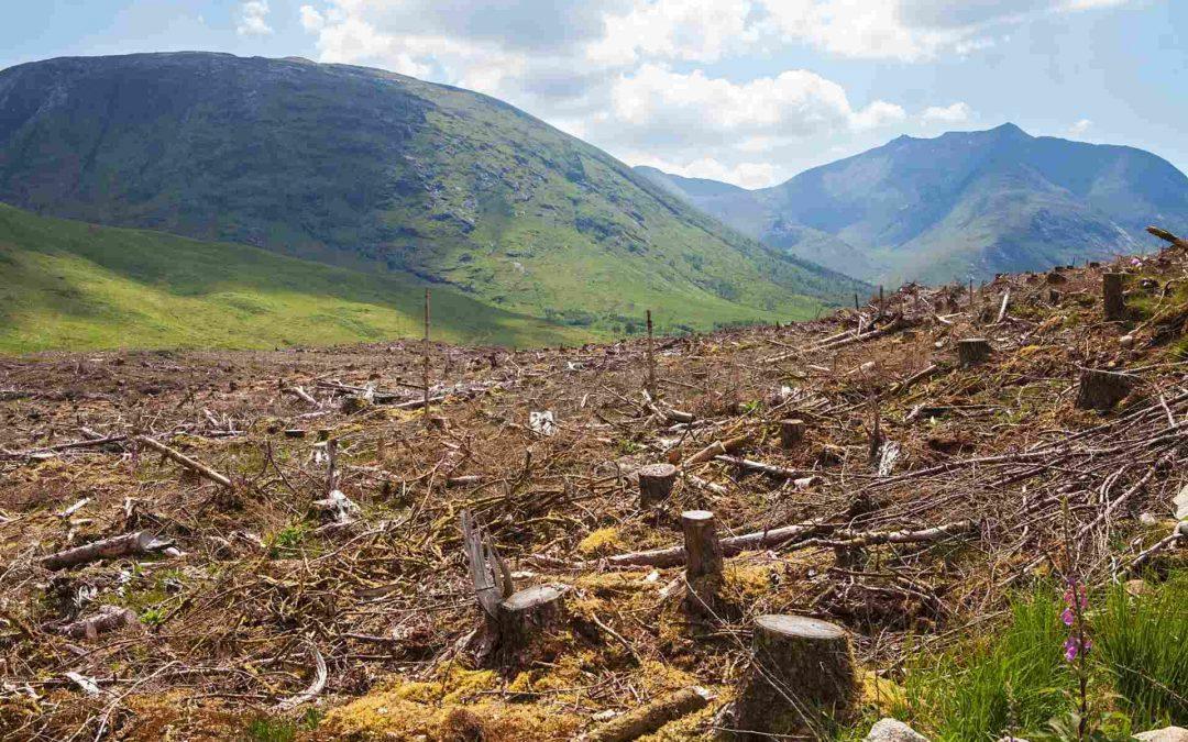 Maderera Andina: La deforestación nos hace vulnerables a las pandemias