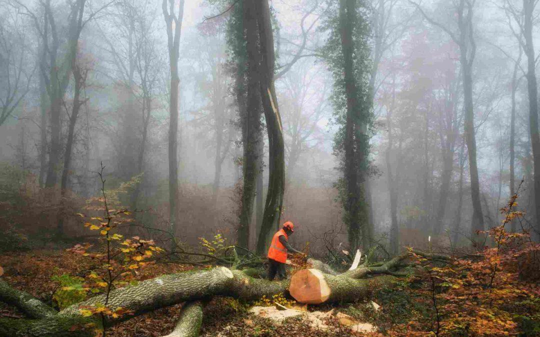 Maderera Andina: La tala ilegal de árboles devora las amazonas en Perú