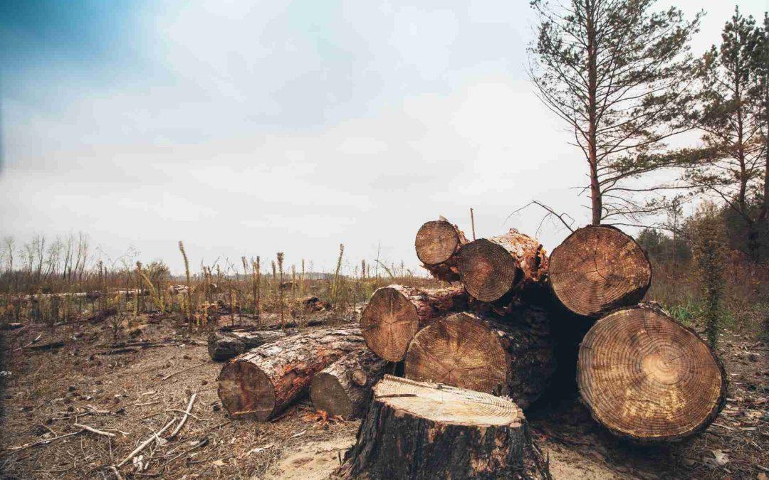 La deforestación de Madera y desigualdad en la Amazonía después del virus