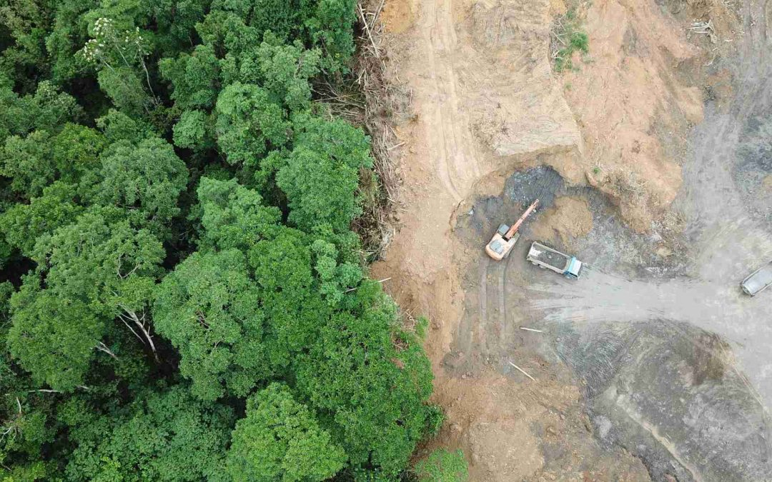 Maderera Andina: Deforestación Amazonica redujo 28.7% en cuarentena