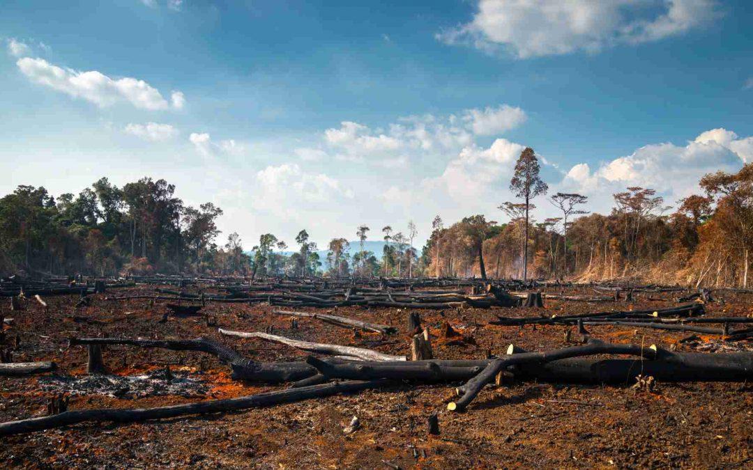 Madereros talan y queman Madera en el Amazonas en cuarentena