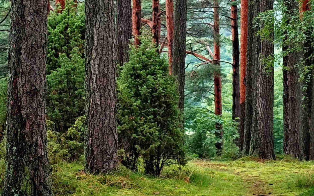 El impacto del uso de la Madera en los bosques de América del Norte