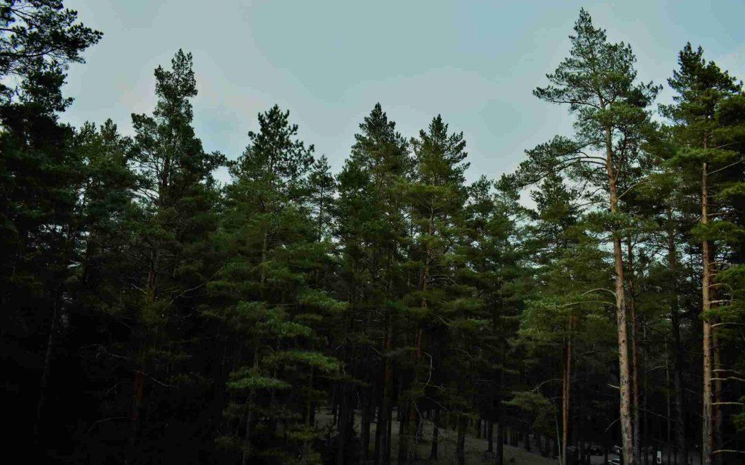 Madera en Madre de Dios: Afinan gestión forestal y verificar transporte
