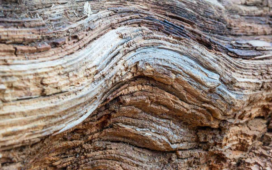 Maderera Andina: ¿Cómo curvar la madera?