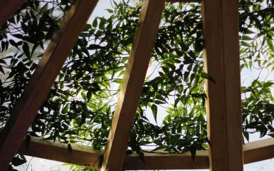 Pallets de Madera: Hacer un invernadero paso a paso con Pallets