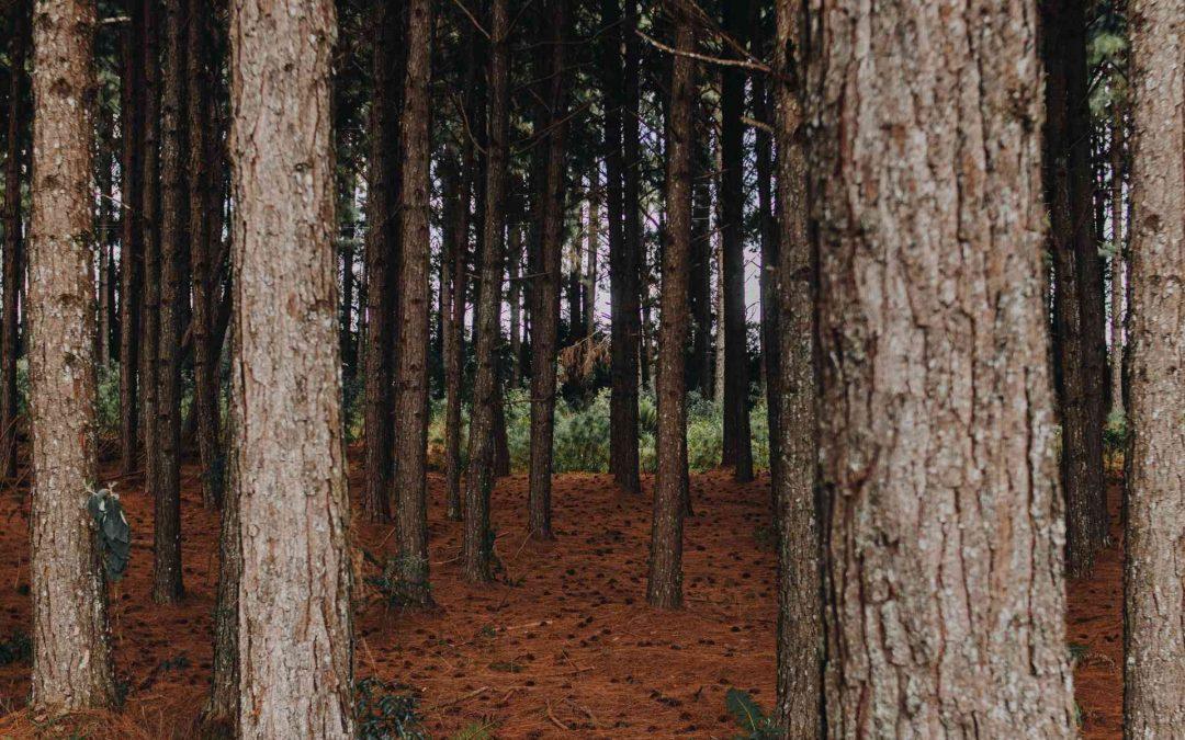 Maderera Andina: Con 100 pallets basta, una nueva casa de madera