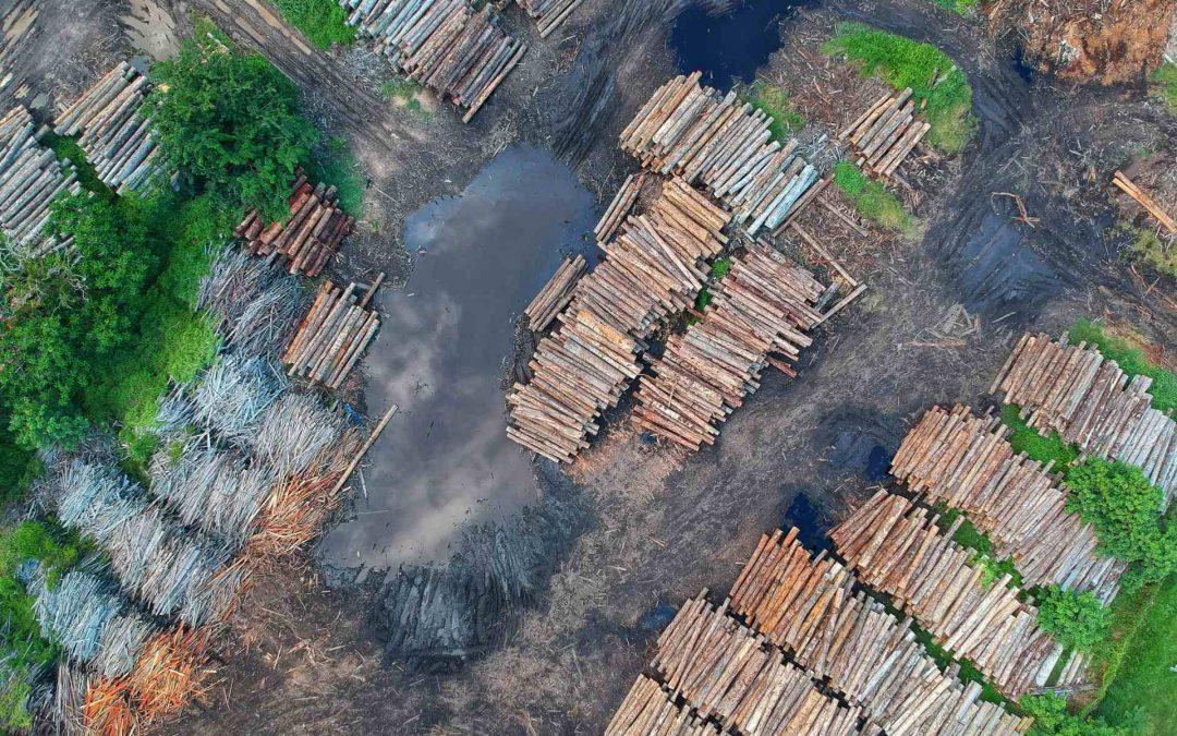 Maderera Andina: El cuidado de la madera al exterior