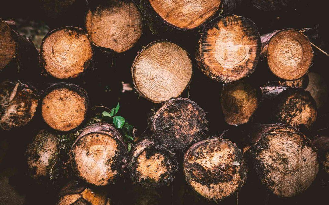 Maderera Andina: Entendiendo la madera