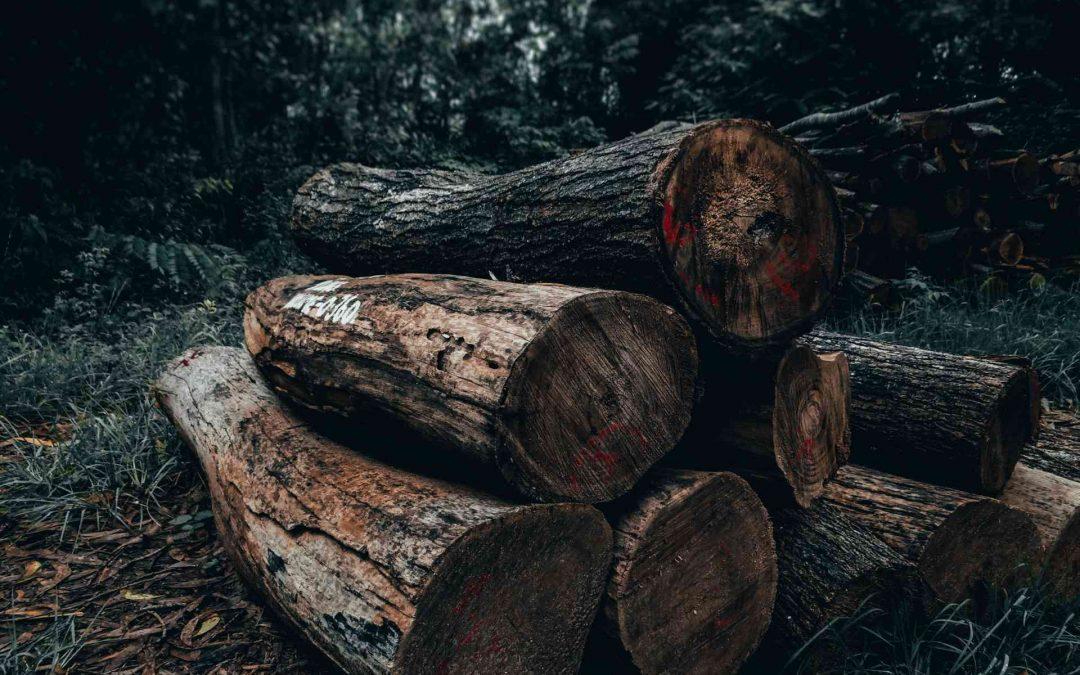 Maderera Andina: La madera contra la deforestación