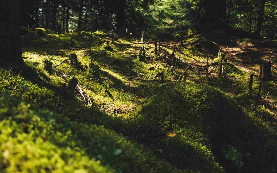 Maderera Andina: El uso sustentable de la madera en construcción