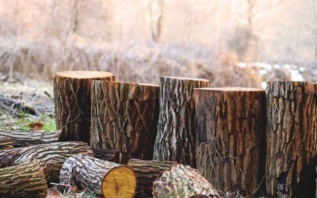 Maderera Andina: Las vigas laminadas de madera y sus usos