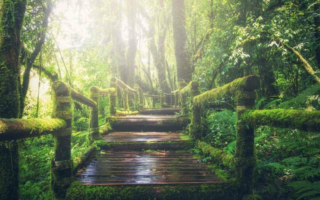 Maderera Andina: Comprobando la sostenibilidad de la madera