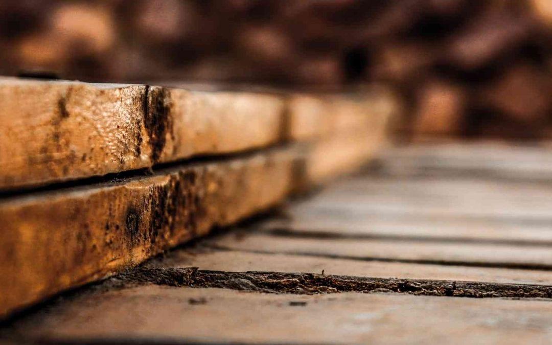 Maderera Andina: ¿Cuánto tiempo tarda en degradarse la madera?