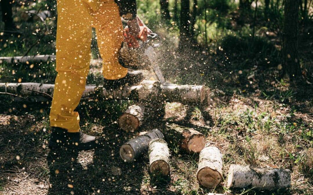 Maderera Andina: Cómo reparar arañazos en la Madera