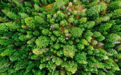 Maderera Andina: Perú, el país con más cedro de América