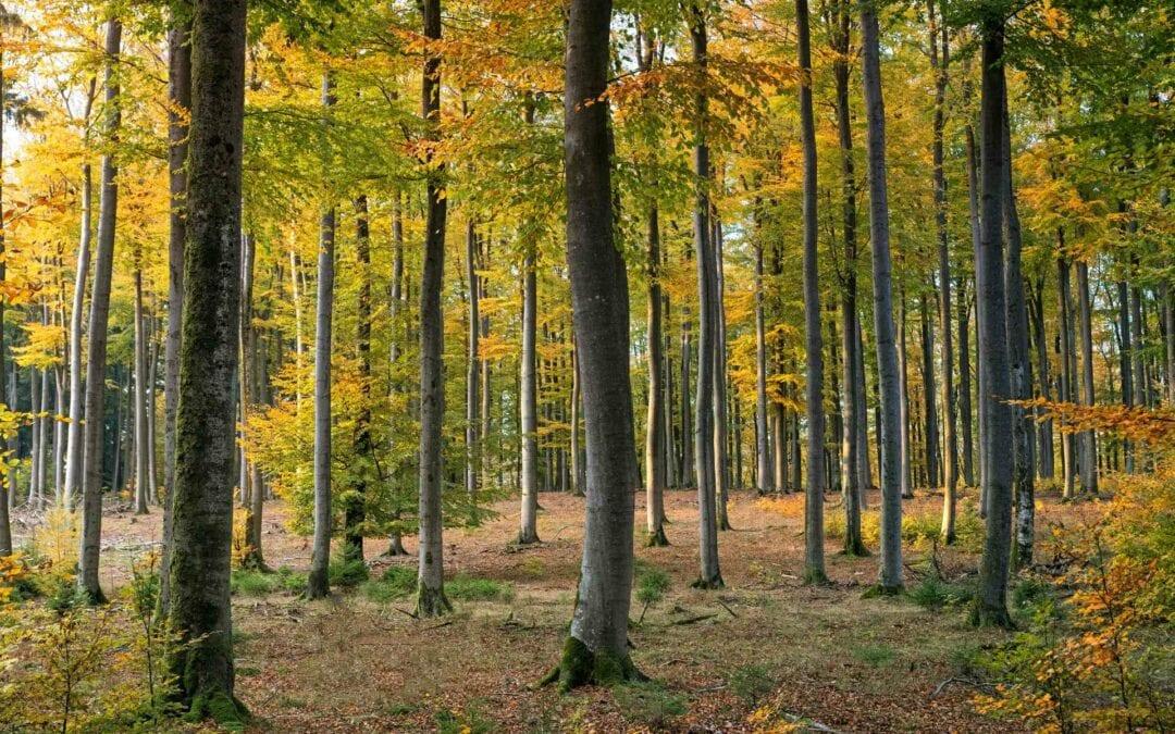 Maderera Andina: El segundo país con mayor extensión de bosques